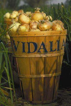 Vidalia, Georgia makes Vidalia onions! ✨Pinterest: Slimbaby86✨