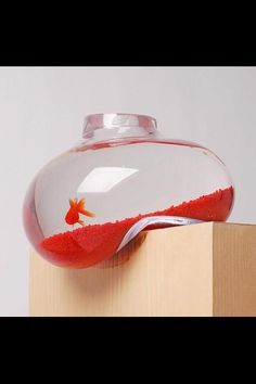 Funny pictures about Bubble Fish Tank. Oh, and cool pics about Bubble Fish Tank. Also, Bubble Fish Tank photos. Bubble Tanks, Bubble Fish, Glass Aquarium, Aquarium Design, Aquarium Ideas, Aquarium Original, Fish Tank Design, Cool Fish, Living On The Edge