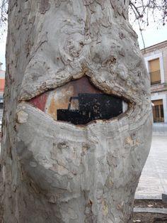 El árbol que se engulló una seña de tráfico en Otero (Toledo).