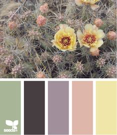 Awesome site for choosing color palettes