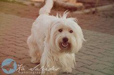 Ká Salcides Fotografia : Eventos : Ensaio Externo : Pets : Famílias :: Yang ^^