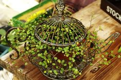 Brewing something special ~~ Dishfunctional Designs: Dreamy Bohemian Garden Spaces