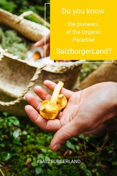 If you want to get to know the roots of the organic paradise you have to come to SalzburgerLand. #salzburgerland #organicparadise #pioneers #austria #visitaustria Z Burger, Visit Austria, Roots, Paradise, Organic, Breakfast, Holiday, Morning Coffee, Vacations