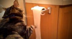 A cica hatalmas rumlit csinál, de aztán rendet is rak a maga módján! :D A videó felétől hangosan kacagtam az irodában!