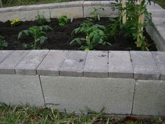 top off the cinder blocks with bricks, I have seen it done with slate too.