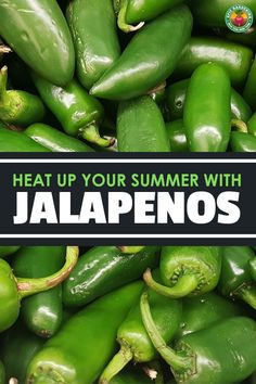 Growing jalapenos at home is a great way to add a little heat into your cooking! Our growing guide shares how to get great harvests. Gardening For Beginners, Gardening Tips, Growing Jalapenos, Growing Vegetables At Home, Organic Gardening, Urban Gardening, Vegetable Gardening, Pepper Plants