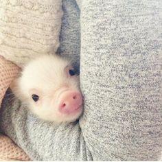 Piggy snuggles - what's cuter than this?? :)