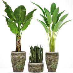 Collection plants Banana tree 3D Model .max .c4d .obj .3ds .fbx .lwo .stl @3DExport.com by deckorator