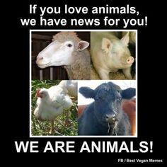 Image of: Meat Animal Welfare Animal Rights Dog Food Recipes Why Vegan Vegan Vegetarian Pinterest 346 Best Animal Rights Images Animal Rescue Vegan Vegetarian