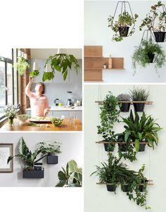 Die 8 Besten Bilder Von Ampelpflanzen Indoor House Plants Balcony