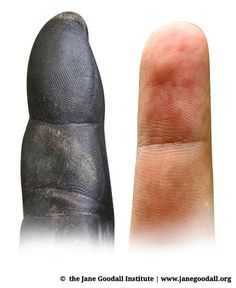 Chimp and human digits. Who can refute evolution... intelligently.... We are animals like it or not.