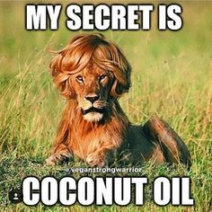 Funny Animal Pictures Of The Day 19 Pics - Funny Animal Quotes - - The post Funny Animal Pictures Of The Day 19 Pics appeared first on Gag Dad. Funny Animal Jokes, Crazy Funny Memes, Really Funny Memes, Stupid Funny Memes, Cute Funny Animals, Funny Relatable Memes, Funny Animal Pictures, Haha Funny, Funny Cute