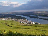 Weingut Baron Knyphausen - Rheingau