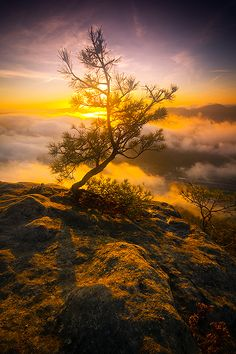 Magic tree - Saxon Switzerland National Park, Germany | mjagiellicz on deviantArt