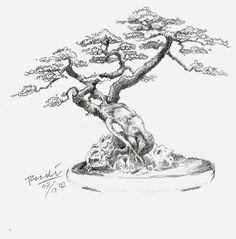 Bonsai Tree - A more economical, but slow-moving technique is to grow a tree on . Bonsai Tree - A Bonsai Tree Types, Indoor Bonsai Tree, Bonsai Trees, Familie Symbol, Bonsai Tree Tattoos, Japanese Bonsai Tree, Tree Sketches, Tree Drawings, Drawing Trees