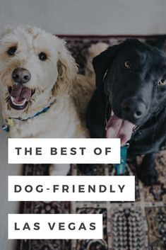 Dog Friendly Hotels In Las Vegas To Pamper Your Best Friend