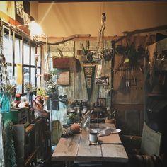 edenさんの、植物,キセログラフィカ,ビカクシダ,クリプタンサス,チランジア,ハオルチア属,接ぎ木サボテン,部屋全体,のお部屋写真