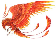Phoenix tattoo - probably get one, it's cool. And Phoenix symbolism is kinda awesome too. Tattoo Dragon And Phoenix, Phoenix Wings, Phoenix Feather, Phoenix Bird Tattoos, Phoenix Design, Phoenix Tattoo Design, Red Bird Tattoos, Feather Tattoos, Tattoo Bird