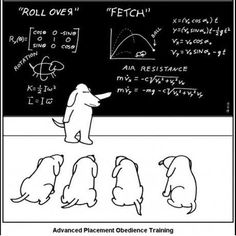 Dog Obedience Training: Advanced Placement Obedience Training … my daughter will get a laugh out of th… – Sam ma Dog Training Physics Jokes, Math Jokes, Science Jokes, Math Humor, Science Comics, Math Comics, Science Symbols, Dog Jokes, Funny Math