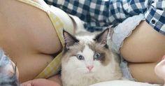Γάτες σε συμπληγάδες