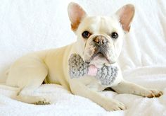 Simply Adorable Dog Bow Tie and Pom Collar | Can you handle the cuteness of this knit dog bow tie?