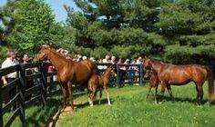 Horse Farm Tours in Lexington!