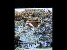 hacienda con capilla via COTA-SUBA  HTY LLAMANOS AL 4006514-3208801059