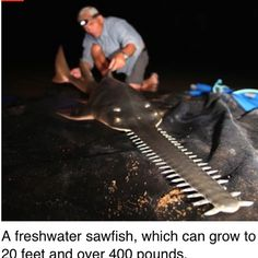 From River Monsters... Yikes !