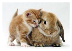 Google Image Result for http://lh3.ggpht.com/_Qogq3ys5M8M/S5G3rNpVtTI/AAAAAAAAC_4/qSFK0Qn6na4/cat_bunny3-1.jpg