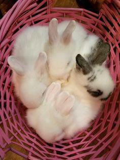 #rabbits #bunnies #pets #cuteanimals #awww #babyanimals