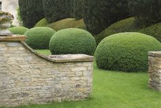 /\ /\ . Jake Hobson . cloud pruning & organic topiary . box blobs