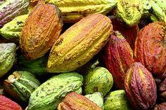 Hummingbird, una pequeña fábrica de chocolates de Canadá, recibe el codiciado…