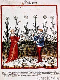 14. Jahrhundert - Hausbuch d. Cerruti / Bertramkraut (53,0 x 71,0 cm)
