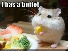 buffet?