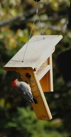 """Innovative """"Clinger"""" Feeder for shelled peanuts or woodpecker mix, handcrafted of durable cedar. Unique Peanut Feeder may be hung or pole-mounted. Entice clinging birds like chickadees, woodpeckers, n"""