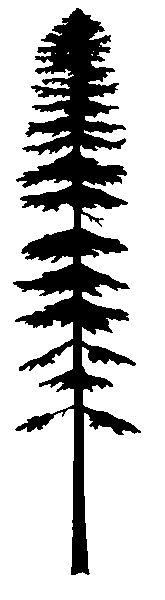 Silhouette - amabilis fir