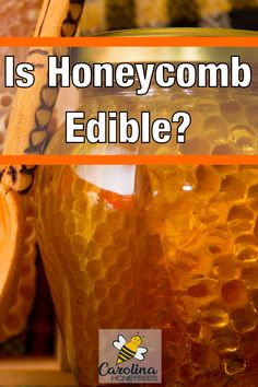 Can you eat raw honeycomb? Honeycomb is edible right from the hive and it tastes yummy. Can You Eat Honeycomb, Honeycomb Raw, Honeycomb Recipe, Cooking With Honey, Call My Honey, Bee Facts, Raw Honey, Honey Bees, Family History Book