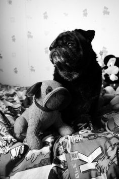 Gonk the Pug and his pal ♡