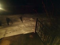 snow outside my front door/my front steps/footprints of a skunk