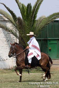 PERUVIAN PASO HORSE AND MARINERA