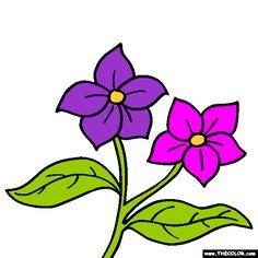 lilac flower coloring page syringa
