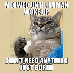 My cat does this to me way to often.