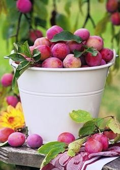 Some plum pickin's, at Summer's end...