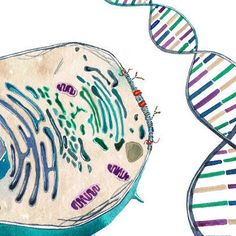 Cell to Helix Science Science Art Biology DNA by sandraculliton