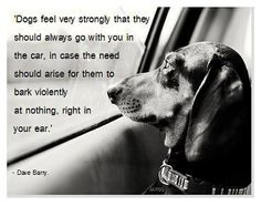 """""""Dogs feel very strongly that they should always go with you in the car, in case the need should arise for them to bark violently at nothing, right in your ear."""""""