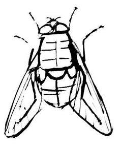 Dung Fly picture 1