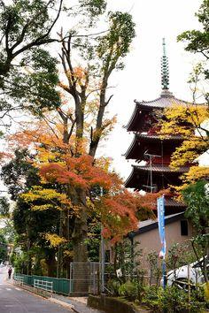 市川市・中山法華経寺の紅葉 Autumn Leaves in Nakayama Hokekyouji Temple,Ichikawa city,Chiba,Japan