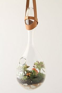 this hanging terrarium is amazing