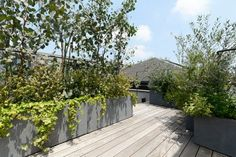 光に満ちた中で植栽の緑が映える屋上空間。