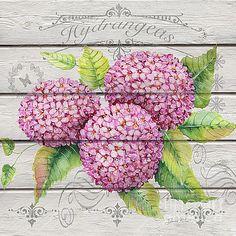 Pink Hydrangeas-JP3920 by Jean Plout